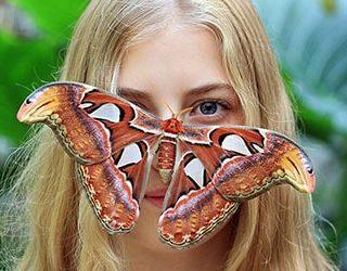 К чему снится большая бабочка?