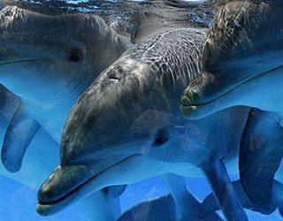 К чему снятся дельфины в воде?