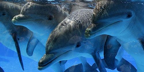 дельфины в воде