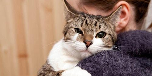 кошка на руках