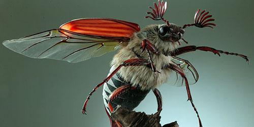Увидеть майского жука во сне