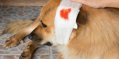 5 к чему снится собака в крови женщине по нострадамусу.