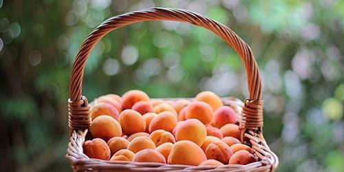 корзина с плодами