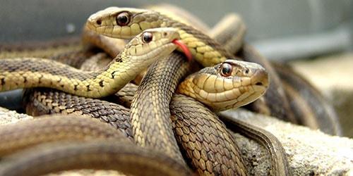 сонник убивать под ногами змей