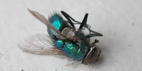 дохлое насекомое