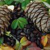 кедровые шишки с орехами