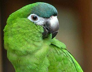 Поймать попугая