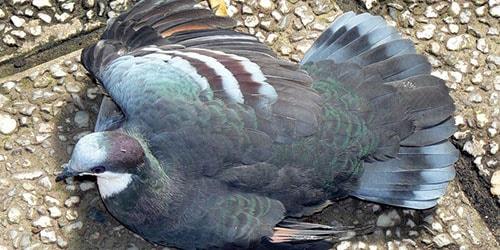 раненая птица на дороге