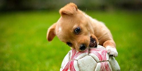 щенок с мячом