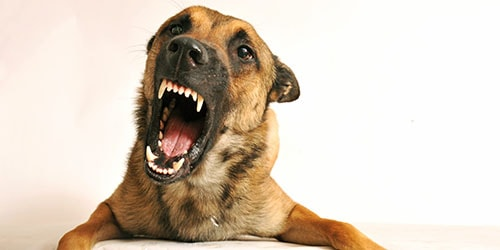 агрессивный пес