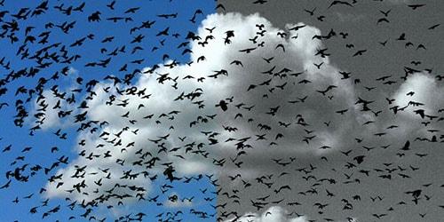 вороны в небе