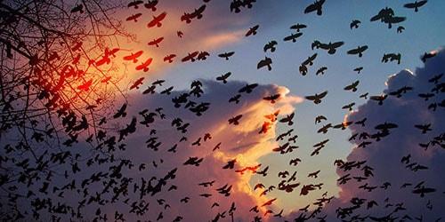 вороны кружат в небе