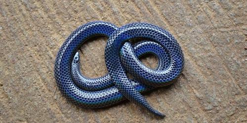 змея на полу