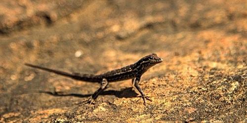 маленькая рептилия