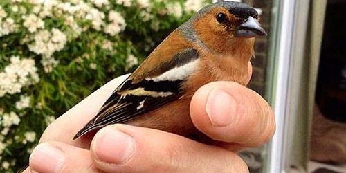 пойманная птичка