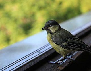 Птица залетевшая в окно