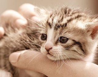 Спасти котенка