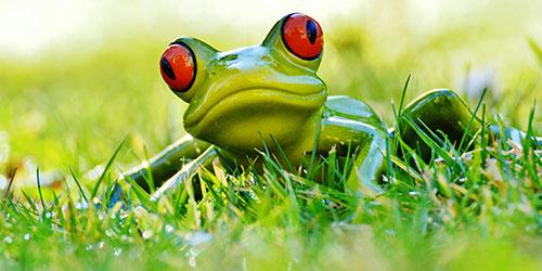 лягушонок в траве