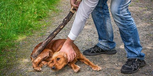 бить собаку