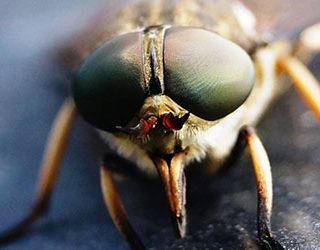 К чему снится большая муха?