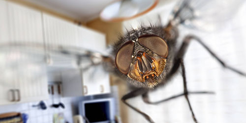 летящая муха