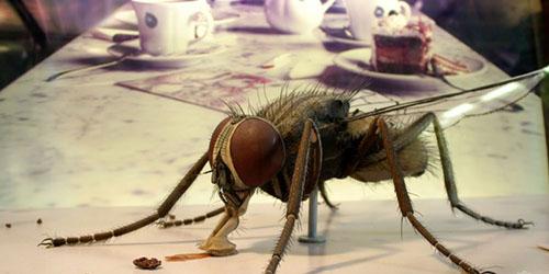 огромная муха