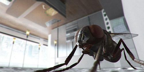 большое насекомое
