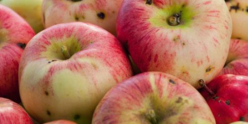 испорченные плоды