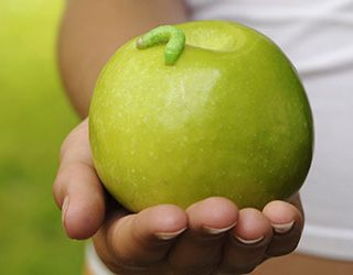 Червивые яблоки