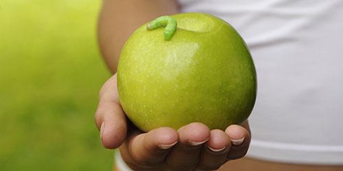 червяк на яблоке