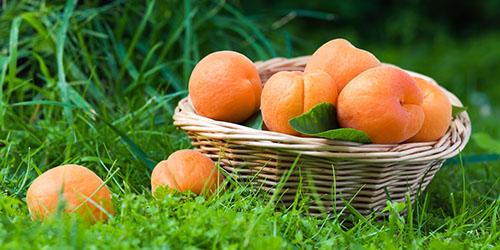 абрикосы в корзине