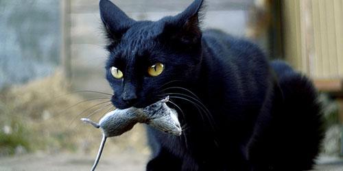 кошка с добычей