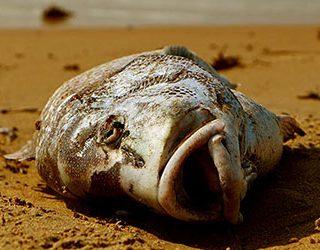 Мертвая рыба женщине