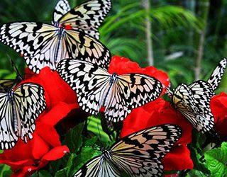 К чему снится много бабочек?