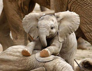 Слоненок женщине
