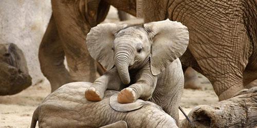 слоник в зоопарке