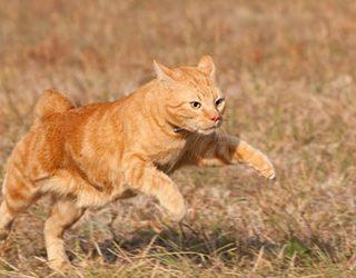 Убегающая кошка