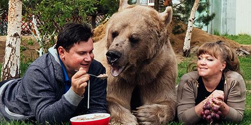 кормить медведя