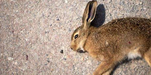кролик на земле