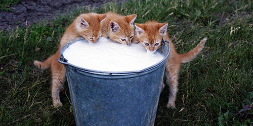 полное ведро молока