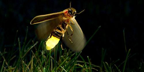 летящее насекомое