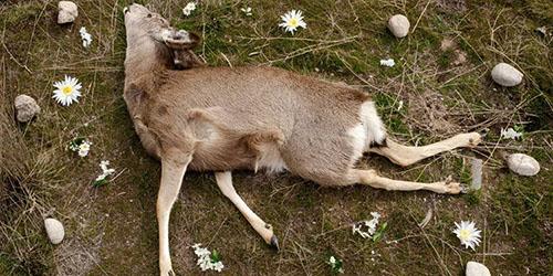 Сонник трупы животных к чему снится трупы животных во сне