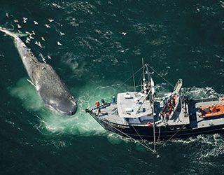 К чему снится кит в воде?