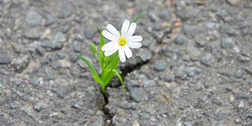 цветок в асфальте