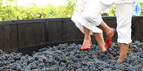 давка винограда