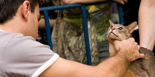 душить кошку