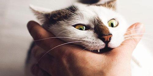 укус кота