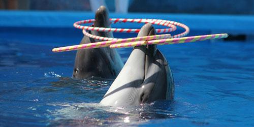 дрессированные дельфины