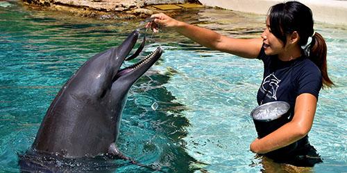 кормление дельфина