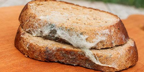 испорченный хлеб